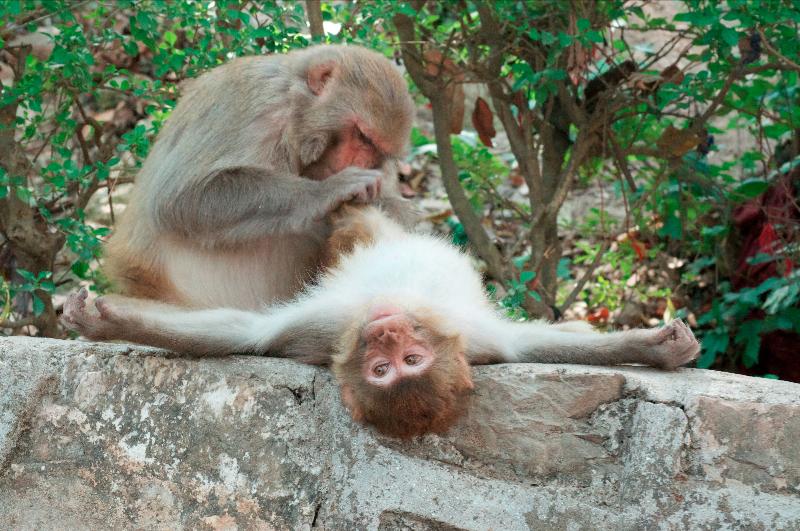monkey-ecstacy