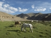 pony-graze-in-evening-sunshine-in-camp