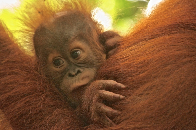 baby-clinging-to-mother