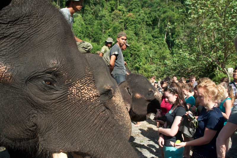 elephant-encounter