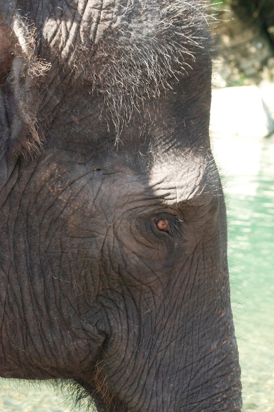 elephant-of-tangkahan