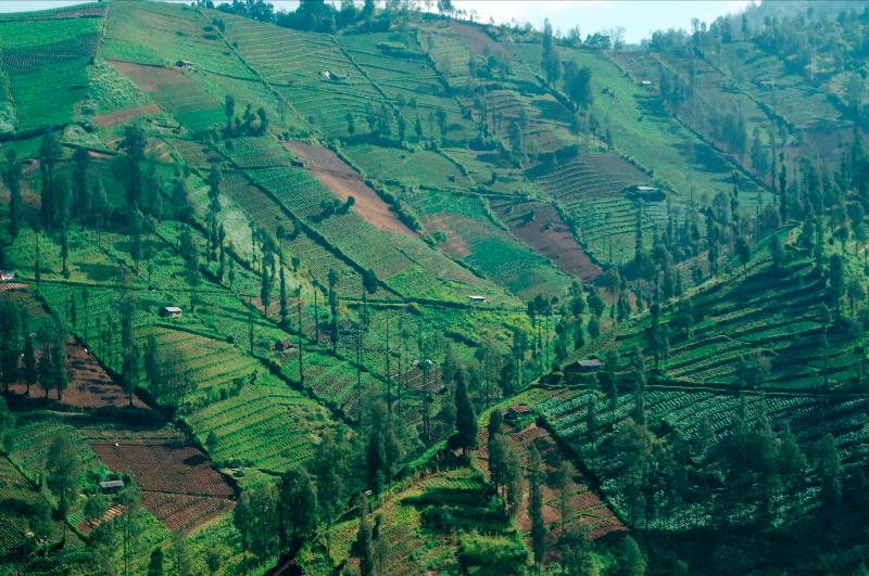 fertile-volcanic-slopes