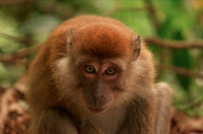 pathside-monkey