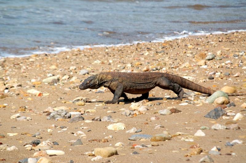 strolling-along-the-beach-on-komodo-island