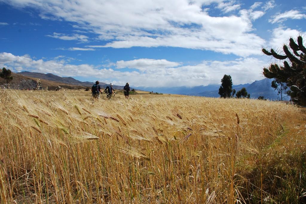 agricultural-landscape-above-huaraz_1024x768