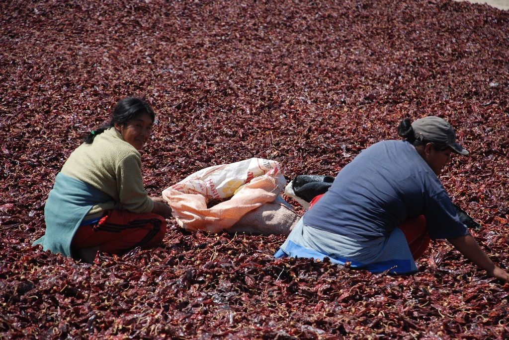 women-turning-the-drying-chilis-over_1024x768