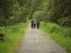 walking-through-part-of-the-hafren-forest