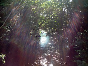 Sunlight filtering though the trees on to the River Arrow