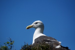 A Somes Island resident
