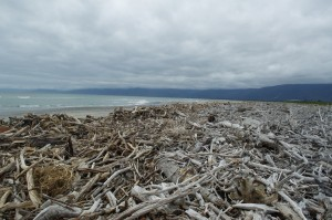 Wood debris on North Beach, Westport