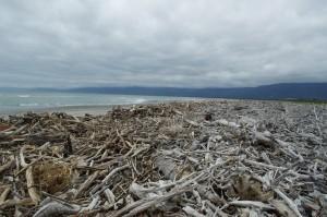 Wood debris on North Beach, Westport