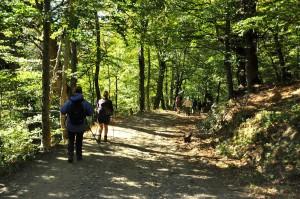 A leafy descent